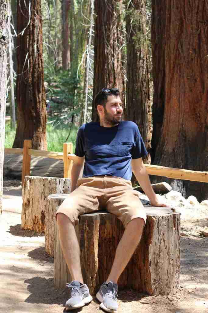 Next to the giant sequoias